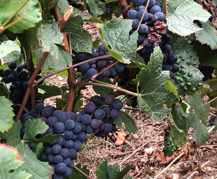 Les Conseils de Viticulteurs Passionnés